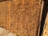 Pali di legno di legno di Robinia, affilati