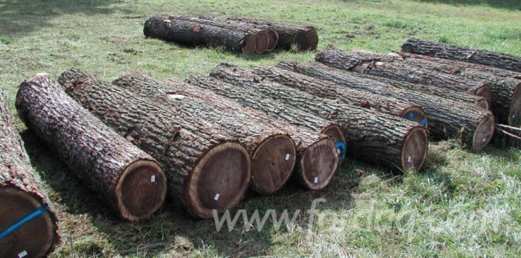 We-Need-Black-Walnut-Logs