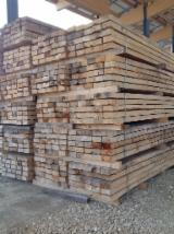 铁路枕木, 榉木