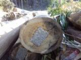 Uruguay - Fordaq Online market - Eucalyptus Regnans Peeling Logs