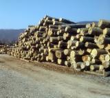 Serbia - Fordaq Online market - Beech Logs 25+ cm