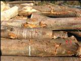 Cherry  Hardwood Logs - -- mm Cherry Saw Logs Romania