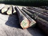 Portugal - Furniture Online market - 30+ mm Oak Saw Logs from France