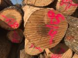 Bosques Y Troncos América Del Norte - Venta Troncos Para Aserrar Hickory Estados Unidos Tennessee