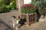 Find best timber supplies on Fordaq - Hazel Flower Box 40 x 40 x 40 cm