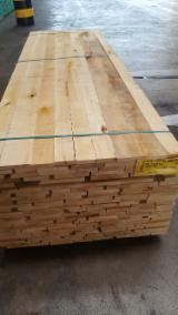 Find best timber supplies on Fordaq - Florian Legno SpA - KD Edged Tilia (Lime Tree), 27; 33; 40; 52 mm thick