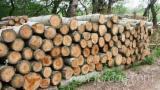null - Poplar / Aspen Industrial Logs 12-30 cm