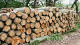 Kaufen Oder Verkaufen  Stämme Für Die Industrie, Faserholz Hartholz  - Stämme Für Die Industrie, Faserholz, Pappel