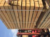 Schnittholz - Besäumtes Holz Zu Verkaufen - Seekiefer, 40 m3 pro Monat
