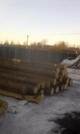 Softwood  Logs For Sale - Pine Logs 20 cm