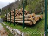 Hardwood  Logs Beech For Sale Germany - Beech Firewood 35 cm