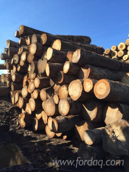 Ash---Red-Oak---Hard-Maple-Logs