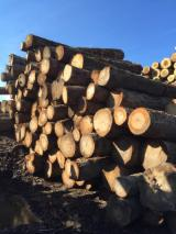 Canada - Fordaq Online market - Ash / Red Oak / Hard Maple Logs 10