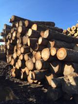 Schnittholzstämme, Esche, Hard Maple, Zuckerahorn, Roteiche