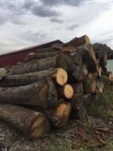 Hardwood  Logs For Sale Romania - 38+ cm Saw Logs from Romania