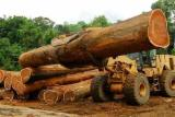Veneer Logs - Azobe Veneer Logs, diameter 70+ cm