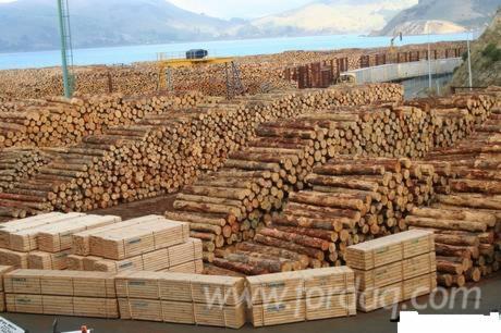 Siberian-Larch---Pine---Spruce-Logs-18-