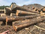 Hardwood  Logs Demands - Ash Hardwood Logs 12