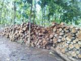 Laubschnittholz, Besäumtes Holz, Hobelware  Zu Verkaufen - Kanthölzer, Teak