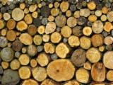 Hardwood  Logs For Sale - 20+ cm Acacia Saw Logs from Romania