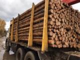 Troncos De Madera Aserrada En Venta - Fordaq - Venta Postes Pino Silvestre  - Madera Roja Alemania