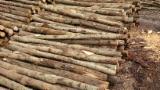 Hardwood  Logs - Chestnut Poles 8-14 cm