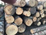 硬木原木待售 - 注册及联络公司 - 单板级原木, 桦木