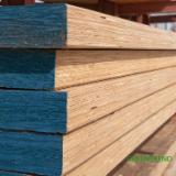 Furnierschichtholz - LVL Pappel - Greentrend, Pappel