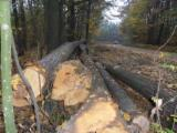 Ash  Hardwood Logs - 28+ cm Brown Ash, Oak, Tilia  Saw Logs from Romania, BOTOSANI (O.S. Flamnzi)
