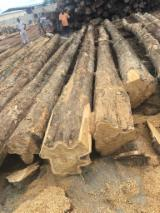 United Arab Emirates Hardwood Logs - Teak Logs 30-50 cm
