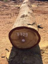 Trupci Tvrdog Drva Za Prodaju - Registrirajte Se I Obratite Tvrtki - Za Rezanje, Iroko