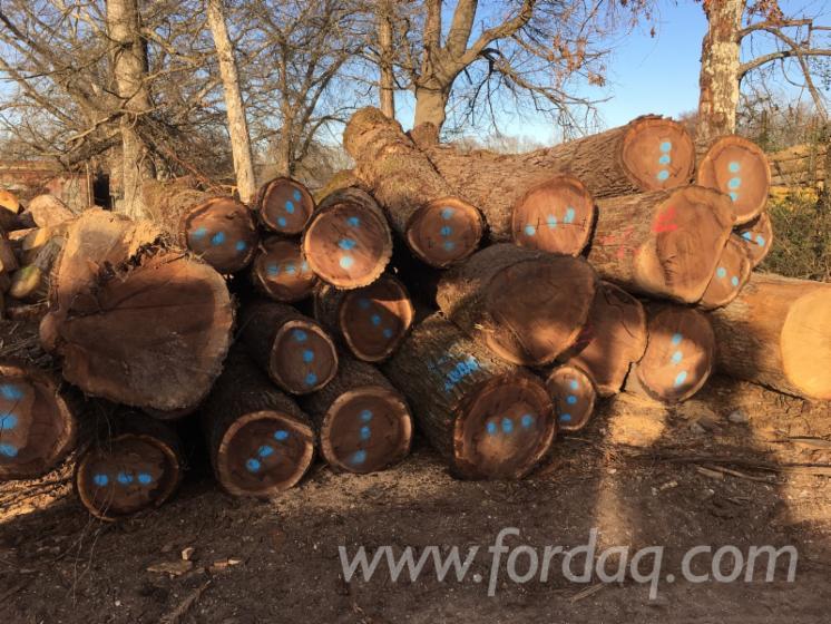 Radiata-Pine-Logs-18-35