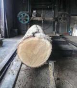 Wood Treatment Services - Sawing Services Romania