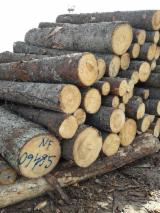 Softwood Logs Suppliers and Buyers - Spruce Industrial Logs 26+ cm