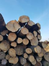 Spain Hardwood Logs - White Ash Logs 30+ cm