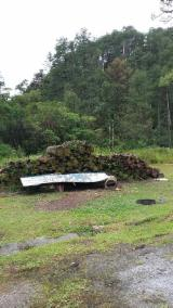 Germany Softwood Logs - Taeda Pine Logs 30-80 cm