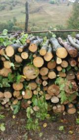 Firewood, Pellets And Residues For Sale - Beech Firewood/Woodlogs Not Cleaved