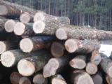 Forêts Et Grumes - Achète Grumes De Sciage Frêne Ontario