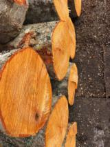 Alder  - Alnus Glutinosa Hardwood Logs - Common Black Alder Logs 18+ cm