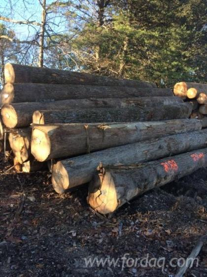 Red-Oak-Logs-45-
