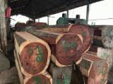 日本 - Fordaq 在线 市場 - 方形木材, 紫木