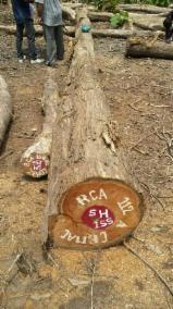 日本 - Fordaq 在线 市場 - 锯材级原木, 柚木
