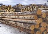 Russia Hardwood Logs - Birch Veneer Logs 16+ cm