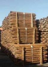 Spain Softwood Logs - TREATED WOOD POSTS
