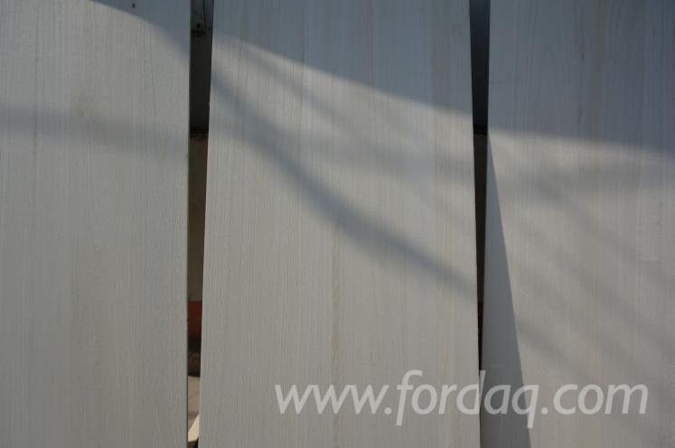 Paulownia-Wall