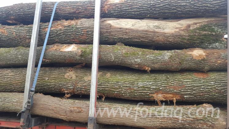 Oak-Saw-Logs-from-Romania