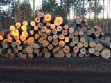 Kanada - Fordaq Online Markt - Schnittholzstämme, Esche, Hard Maple, Zuckerahorn, Roteiche