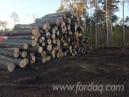 Red-Oak---Cherry---Ash-Logs