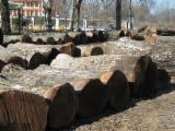 Greece Hardwood Logs - Walnut Logs 25+ cm