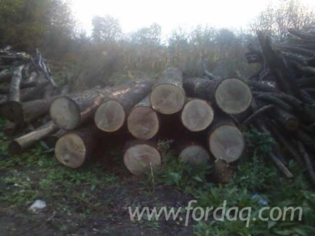 28--cm-Oak-Saw-Logs-from